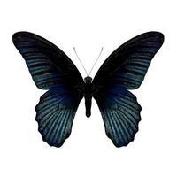 Parijs pauw vlinder foto
