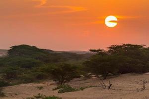 kleurrijke woestijn die bij zonsondergang is ontsproten, die in Venezuela wordt genomen foto