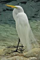 vogel bruid foto