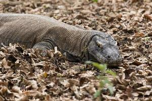 Nationaal Park Komodo Island foto