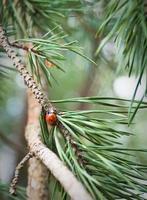 rode bug instelling op een boomtak