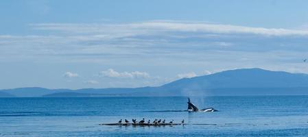 kijken naar de orka's foto