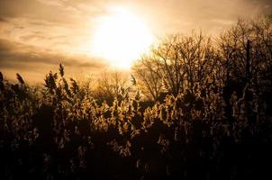 zonsondergang met struik foto
