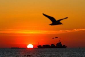 zonsondergang en silhouetzeemeeuw foto