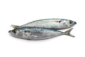 twee makreel foto