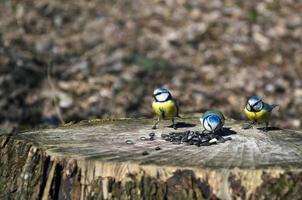 kleine vogels foto