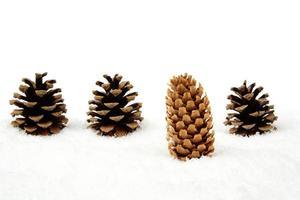 kerst dennenappel sneeuw onderscheidt zich van de menigte in de rij foto