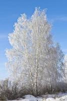 boom in de sneeuw foto