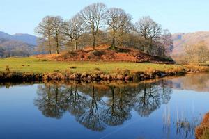 prachtige weerspiegeling van bomen in een stil meer foto
