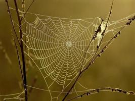 spinnenweb foto
