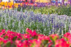 bloementuin foto