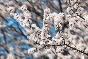 lente bloemen foto