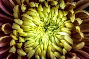 tropische bloem foto