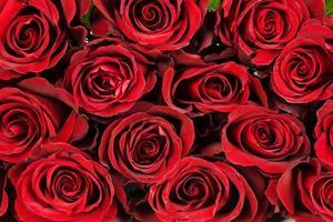 rosen rosen foto