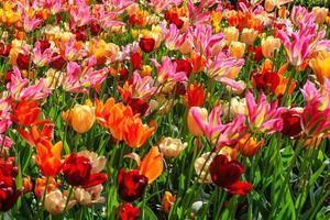 bloemen tuin foto