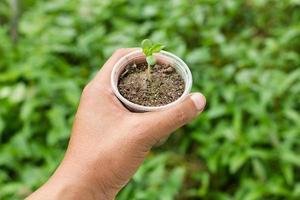 hand met een kleine groene boomplant foto