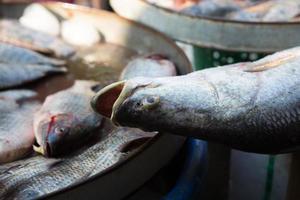 verse zeevruchten op de markt in Thailand foto