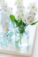 matthiola bloemen foto