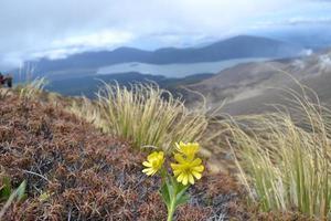 berg bloem foto