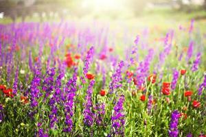 berg bloemen foto