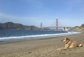 hond in de zon foto