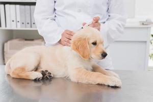 dierenarts injectie doet bij een schattige hond foto