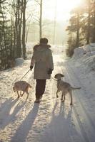 de honden uitlaten in februari, oslo, noorwegen foto