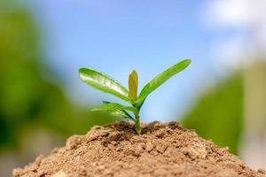 zaaiende plant foto