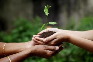met een plant tussen handen foto