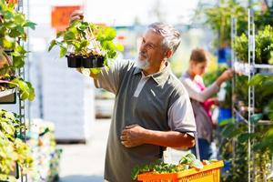 senior man kopen aardbei planten in een tuincentrum foto