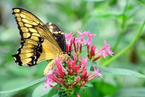 vlinder bloem foto