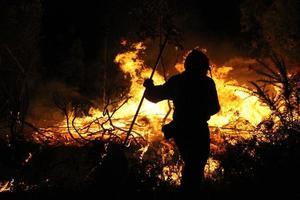 brandweerlieden bestrijden bosbrand in een bos foto