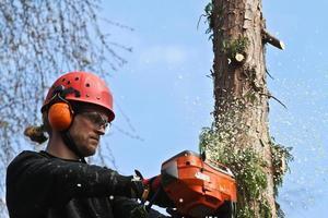 houthakker in actie in Denemarken foto