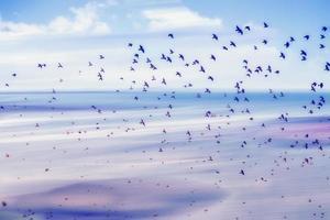 vogels vliegen en abstracte lucht, lente achtergrond abstracte gelukkige achtergrond foto