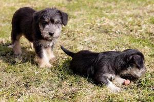 puppy's foto