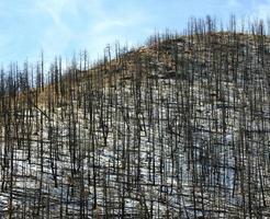 nasleep van bosbrand foto