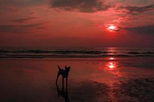 kwaadaardige zonsopgang tot zonsondergang rode lucht op zee. foto