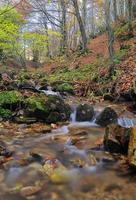 herfst. foto