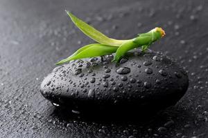 zen stenen en bamboe met dauw foto