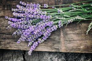 verse lavendel foto