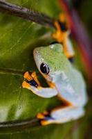 verzadigd thema van jungle met exotische kikker foto