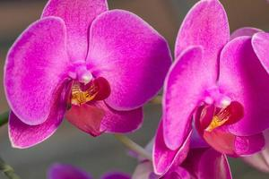 mooie paarse orchidee close-up foto