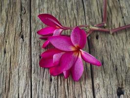 rode frangipanibloem op houten lijstkuuroord foto