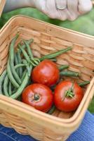 groenten verzamelen foto