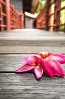 roze plumeria op houten vloer concept van ontspannen en spa foto