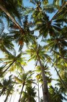 palmbomen tegen een blauwe hemel foto