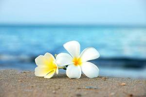 twee plumeria bloemen op het zand op het strand foto