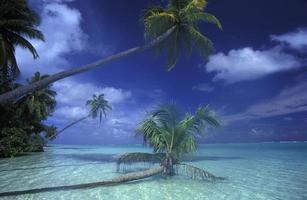 Maldiven strand in de Indische Oceaan foto