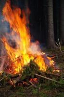 brandende vuren takken. het bos schoonmaken. foto