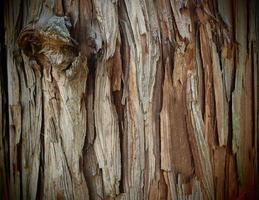 natuurlijke textuur boomschors foto